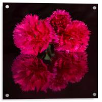 Reflected Carnations, Acrylic Print