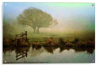 Misty Morning Glory, Acrylic Print