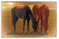 Horses In The Sunset, Acrylic Print