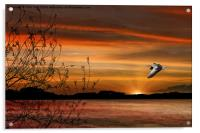 Wild Goose In Flight, Acrylic Print