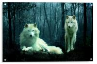 Arctic Wolves, Acrylic Print