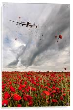 Poppies Dropped , Acrylic Print