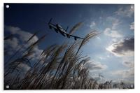 This Is Bomber Country, Acrylic Print