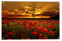 Sunset Poppies The BBMF, Acrylic Print