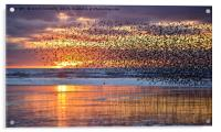 Starlings At Sunset, Acrylic Print