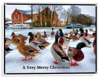 Merry Xmas to Everyone on P4ME, Acrylic Print