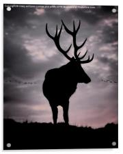 Stag And Sunset 2, Acrylic Print