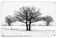 Three Winter Oaks, Acrylic Print
