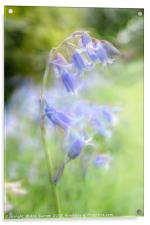 Bluebell Chaos, Acrylic Print