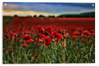 Field of Remembrance, Acrylic Print