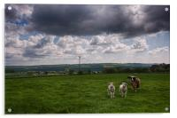 Sheep In The Stour Valley, Acrylic Print