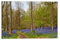 Bluebell Woods Greys Court Oxfordshire, Acrylic Print