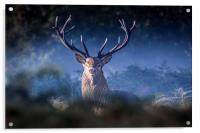Red Deer Stag, Acrylic Print