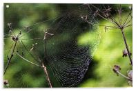 Spiders Web covered in dew, Acrylic Print