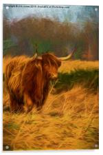 Highland cow with painterly effect, Acrylic Print