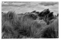 Sand Dunes in Black and White, Acrylic Print