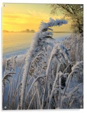 Frosts in the grass, Acrylic Print