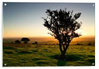 Dartmoor Sunset Tree, Acrylic Print