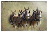 Old West Mule Train, Acrylic Print