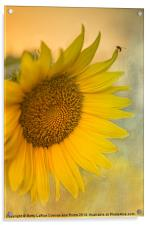 Star of the Show, Acrylic Print