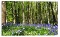 Enchanting bluebell wood!, Acrylic Print