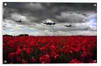 Spitfires And Blenheim , Acrylic Print