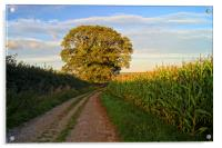 Oak Tree & Country Lane, Acrylic Print