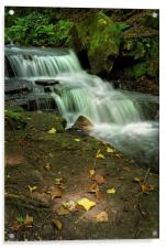 Glowing Beauty at Lumsdale                        , Acrylic Print