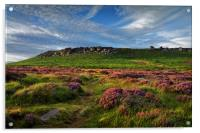 Higger Tor Heather, Acrylic Print