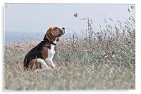 The Beagle, Acrylic Print