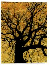 Oak tree in yellow., Acrylic Print