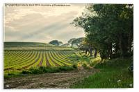Crop and Countryside, Acrylic Print