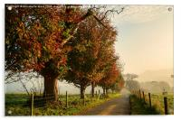 Autumn Morning Amble., Acrylic Print