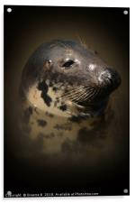 Portrait of a Seal, Acrylic Print