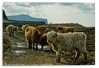 A herd of Highland Cattle, Acrylic Print