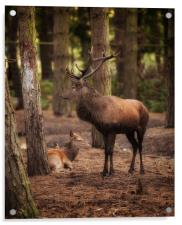 Stag and Hind In The Woods, Acrylic Print