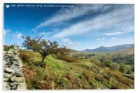 Lone tree in the Lake District, Acrylic Print