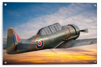Harvard Fighter Trainer, Acrylic Print