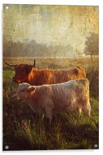 Highlanders. Scottish Countryside, Acrylic Print