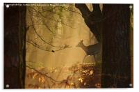 New Forest Sika Deer, Acrylic Print