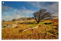 Stowes Hill and wind blown tree on Bodmin Moor, Acrylic Print