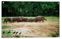 JST2918 Watching the hippos go by, Acrylic Print