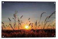 Sunset Grass, Acrylic Print
