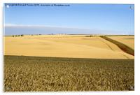 Yorkshire Wolds at Harvest Time, Acrylic Print