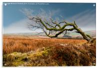 Prevailing Wind, Acrylic Print