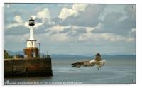 """""""Coming in to land"""", Acrylic Print"""