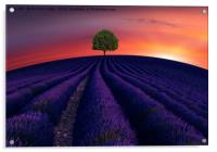 The little green tree on lavender hill , Acrylic Print