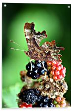 Butterfly attarcted to Summer Fruits, Acrylic Print