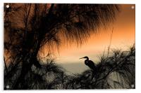 Home to Roost. A Snowy Egret (Egretta thula), Acrylic Print