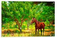 Digital painting of a chestnut horse out grazing i, Acrylic Print